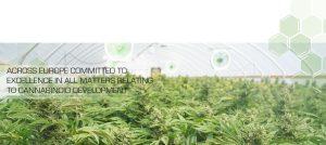ECTA Cannabinoid Plants